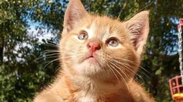 ginger Oliver