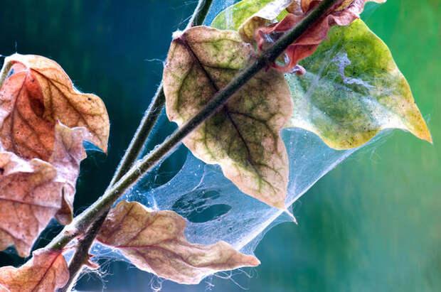 Страдают многие виды растений