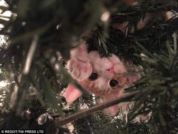 Привет, хозяин! животные, кот, коты, кошки, новый год, приколы с животными, фото, юмор