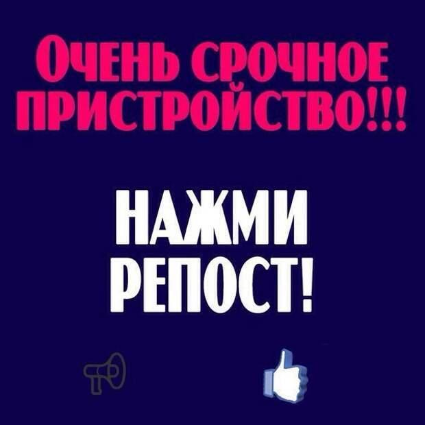 Срочно нужен дом обаятельной, ласковой косоглазке)