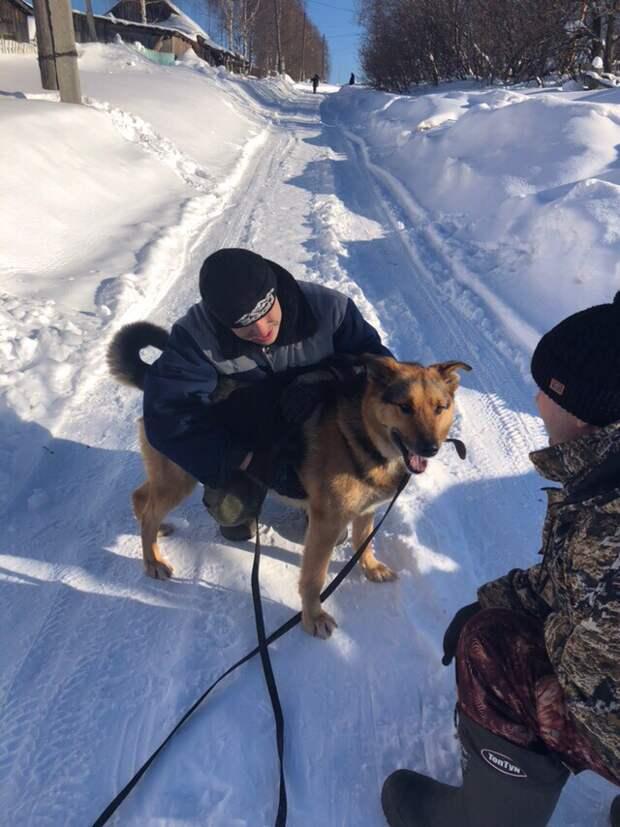 Ухоженный пес в ошейнике оказался никому не нужен после аварии дворняга, история, овчарка, пес, приют, собака