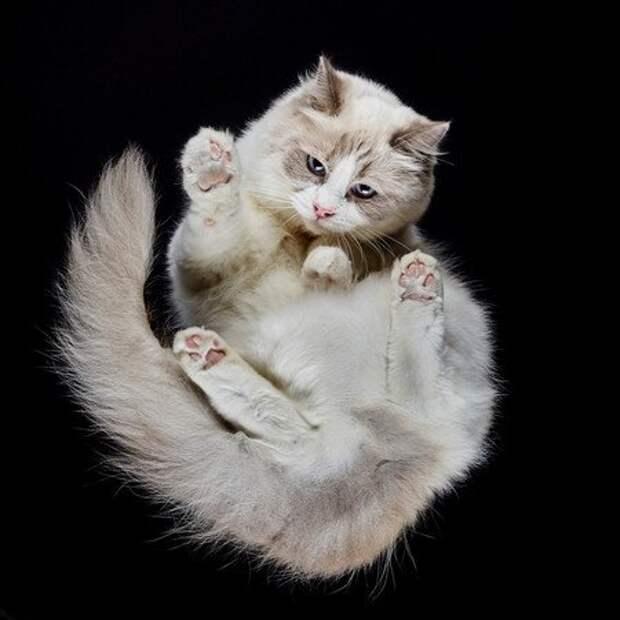 Взгляд снизу: чудесные фотографии кошек снеобычного ракурса