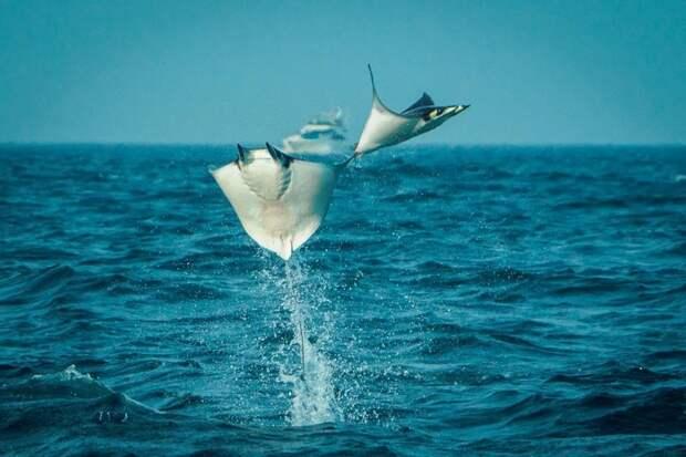Невероятно, но факт: 10 животных, которые, оказывается, умеют летать