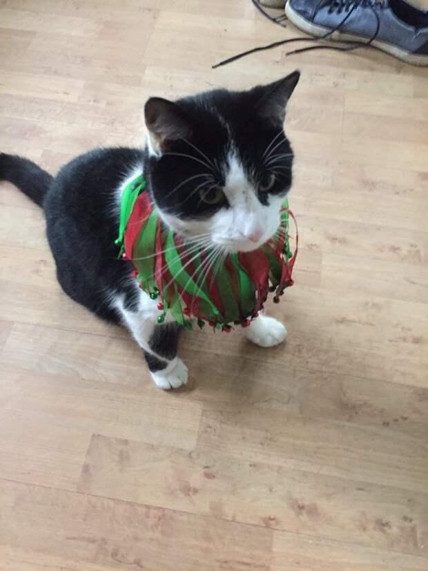 1. Кот спокойно живет на две семьи Любовь, животные, котизм, котики, коты