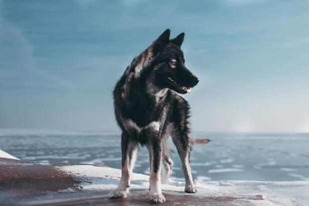 11. Оставайся спокойным и доверяй своему пути жизненная позиция, жизнеутверждающие, канада, собаки, философия жизни, фото собак, фотограф, хаски