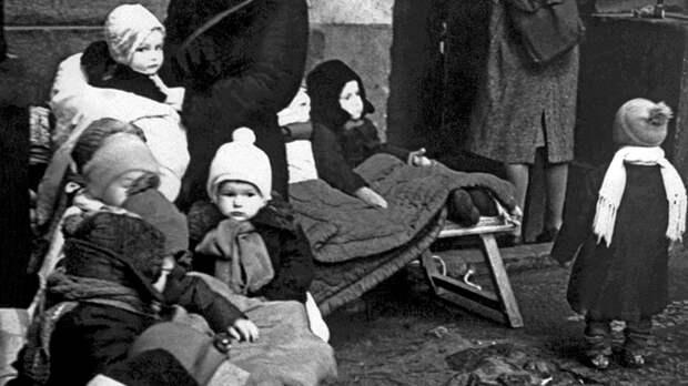 Настойка из хвои и дрожжи из древесных опилок: Рецепты выживания от учёных блокадного Ленинграда