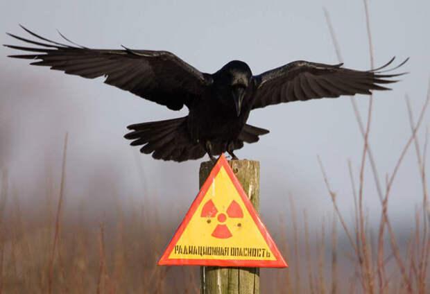 Абсолютно безразличные существа вороны, животные, птицы, фото