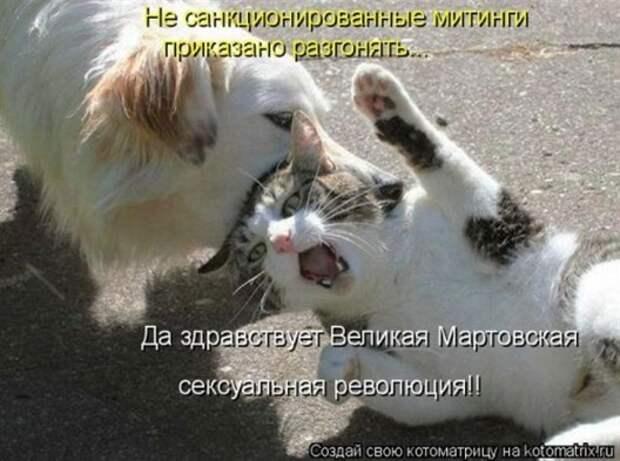1300413789_kotomatritsa-17