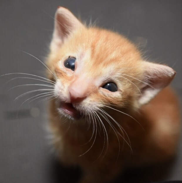 Он был самым маленьким среди котят… Но девушка помогла выжить больному котенку!