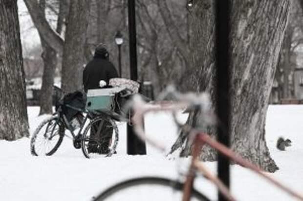 Бездомный зимой / Фото: pixabay.com