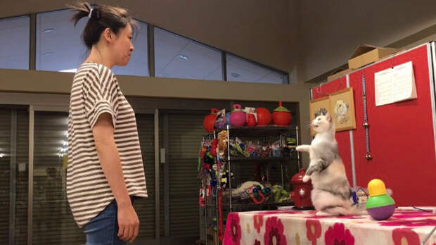 Кошка Эбису копирует свою владелицу. Фото FUMI HIGAKI