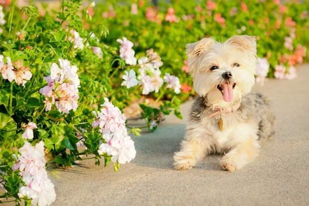 Милые собачки для улыбки
