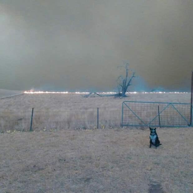 Собака спасла стадо овец, когда австралийский пожар подобрался совсем близко к ферме