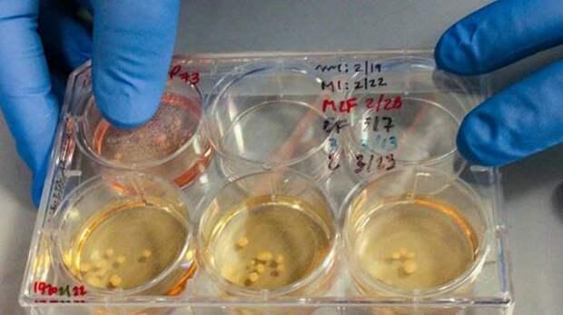 Открытия, которые приподнимают завесу тайны над неандертальцами