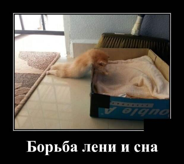 Образ кошки в демотиваторах демотиваторы, животные, коты, юмор