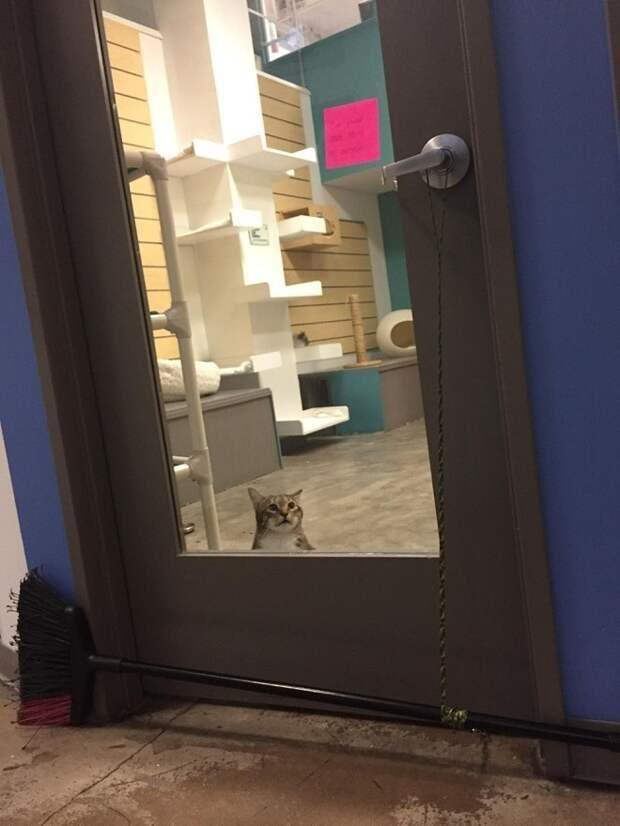 Кот за дверью