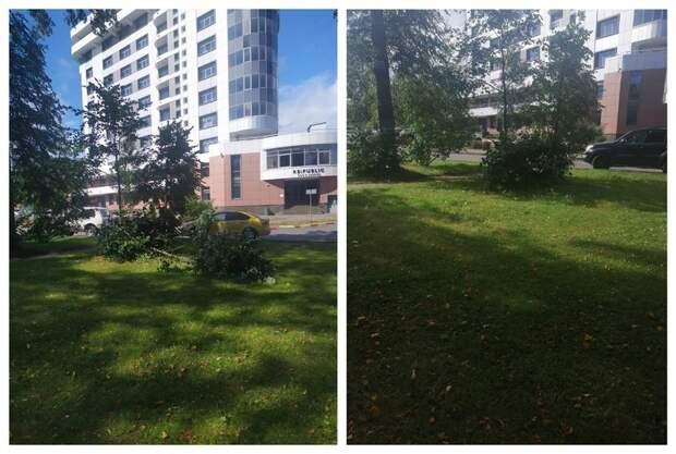 В Петрозаводске штормовой ветер повалил десятки деревьев
