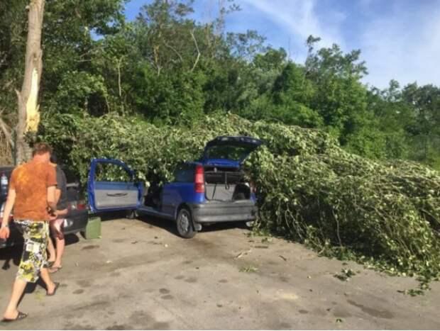 В Севастополе на людей и машины падают деревья (ФОТО)