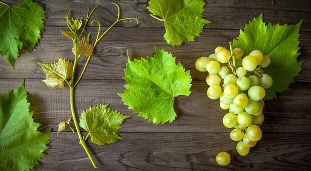 Виноград не бывает червивым! Почему?