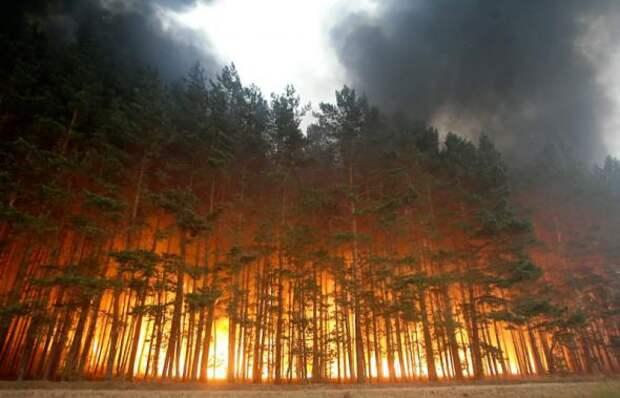 МЫ ГОРИМ! 12 лесных пожаров за прошедшие сутки
