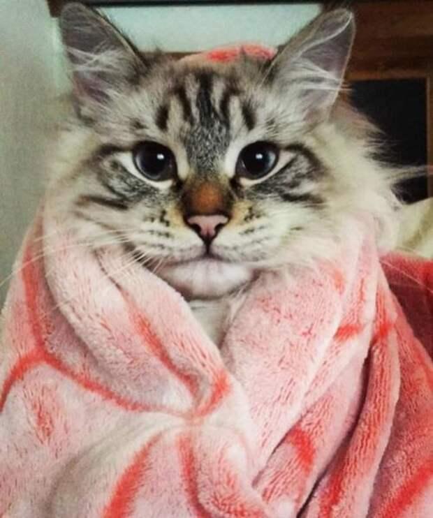Фотографии с котиками, которые подарят вам дополнительный повод для улыбки