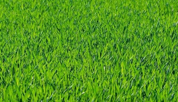 На Новой улице убрали сено с газона