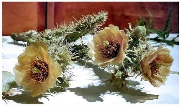 Стеклянные цветы Леопольда и Рудольфа Блашка