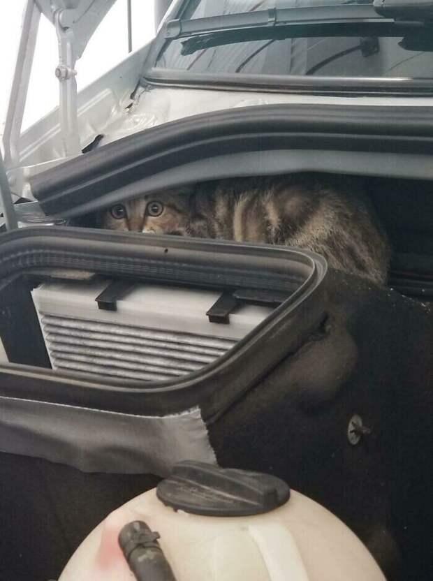 Так выглядят глаза кошки после 50-километровой поездки под капотом