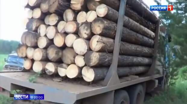 Кто в лес, кто по дрова: как вырубают Россию