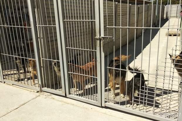 Как строят приют для животных в Симферополе