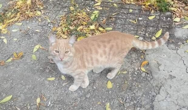 В Омске ищут дом больничному коту, названному в честь коронавируса