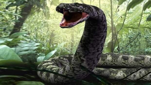 Гигантские анаконды из болот Амазонки