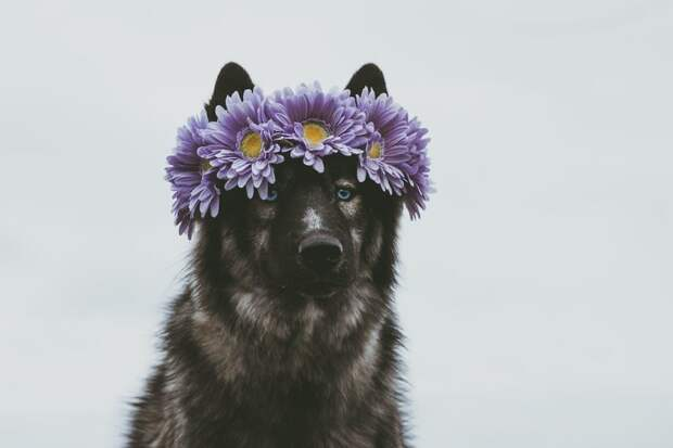 14. Храни в памяти красивые моменты, а не вещи жизненная позиция, жизнеутверждающие, канада, собаки, философия жизни, фото собак, фотограф, хаски