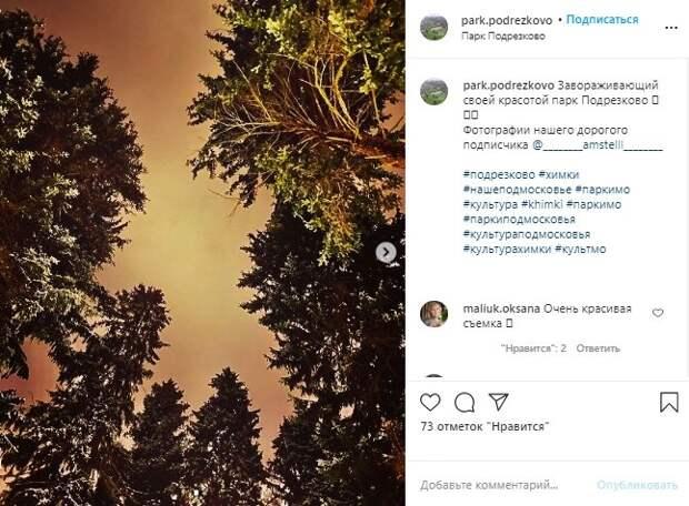 Фото дня: бронзовый закат в парке «Подрезково» впечатлил пользователей соцссетей