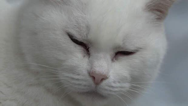 Когда меня не станет, через неделю, придет к двери белый кот. Впусти его, он счастье принесет