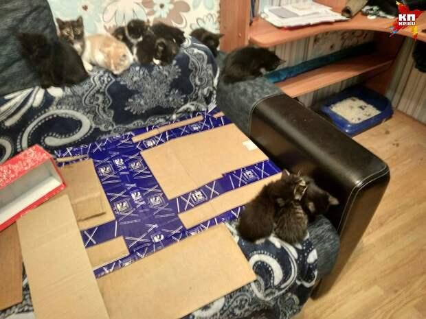 Сейчас Андрей собирается отправить котят в стационар Фото: Андрей Горшунов