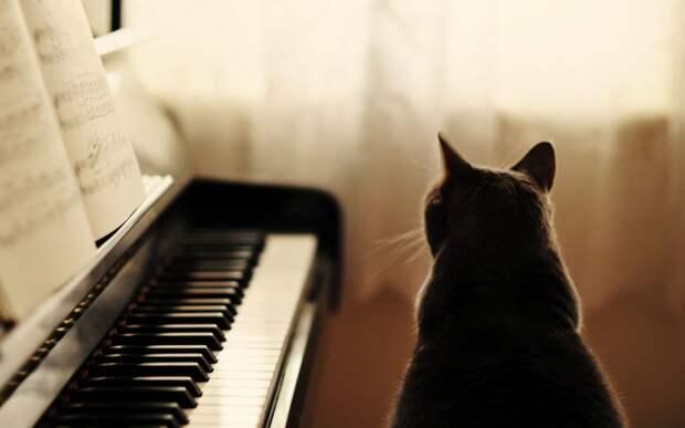 cat-piano-music-hd-wallpaper