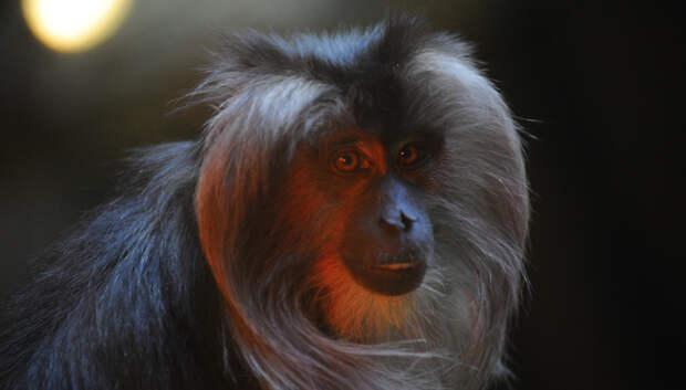 Зоопарки, этнопарки и океанариумы начнут работу в Подмосковье со 2 июля