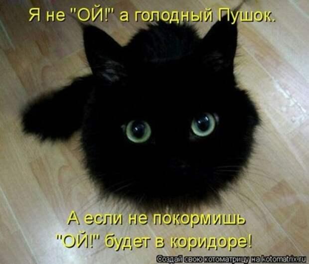 1305242885_kotomatritsa-14