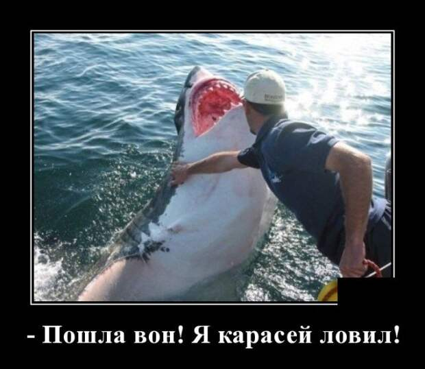 Демотиватор про акулу