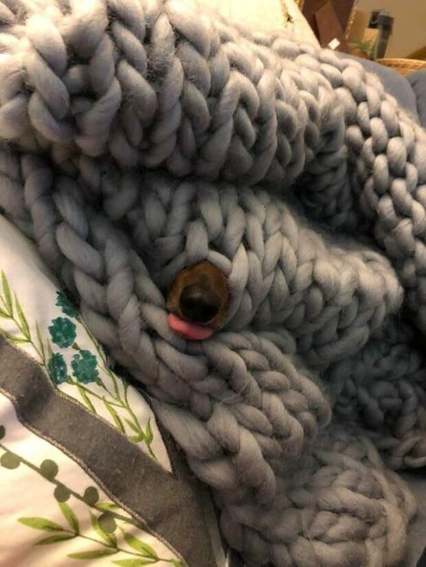 Снимки, которые покажут, что собаки умеют рассмешить любого