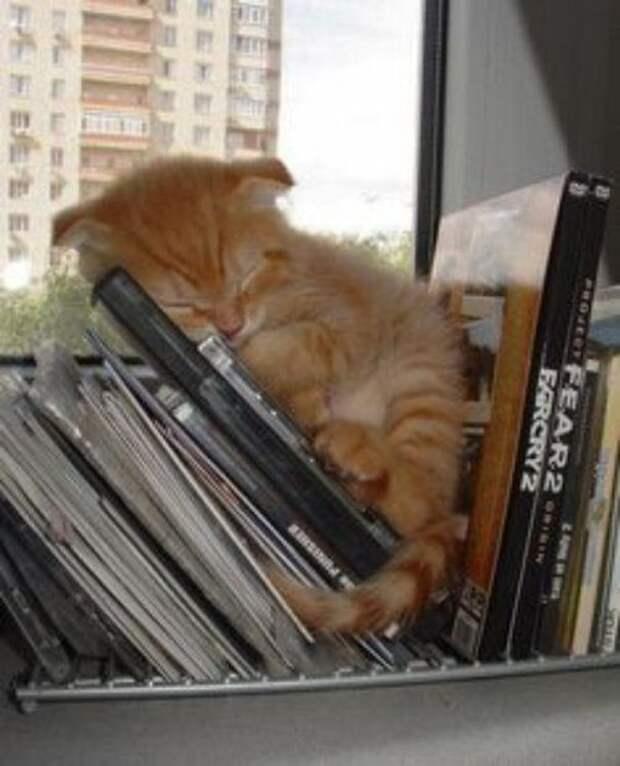 Кошки, которые могут заснуть в любой позе и в любом месте