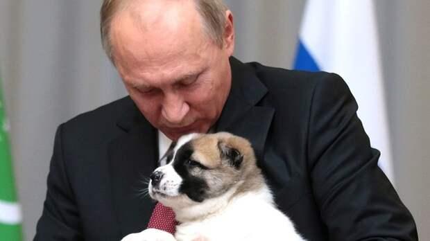 """Британец раскрыл японцам """"тёмную сторону"""" Путина. Но что-то пошло не так: """"Он не волшебник, но..."""""""