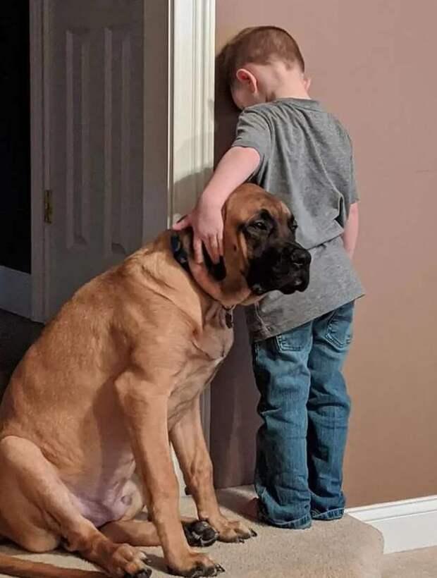 Собака встала в угол, чтобы поддержать провинившегося малыша
