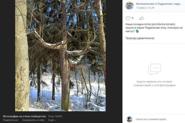 Фото дня: в Подрезкове нашли елку-кактус