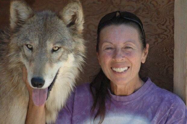 Женщина спасла трёх волчьих щенков от гибели, теперь у неё три самых верных друга!