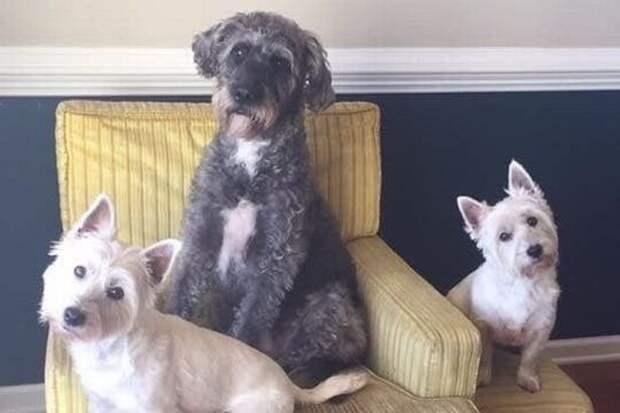 Мертвая вода: четыре собаки погибли наглазах растерянных хозяев после купания втоксичном озере