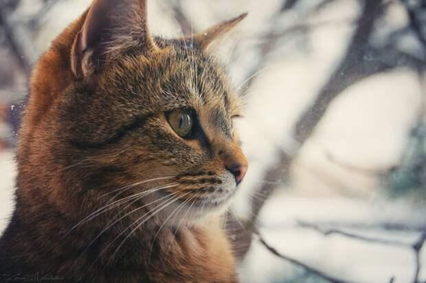 ФОТОВЫСТАВКА. Zoran Milutinovic: жизнь кошек