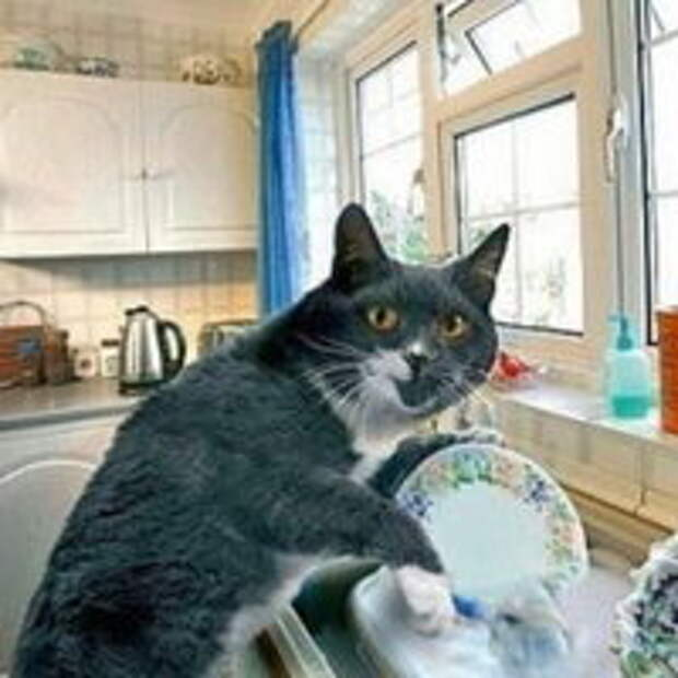 Кот моет посуду