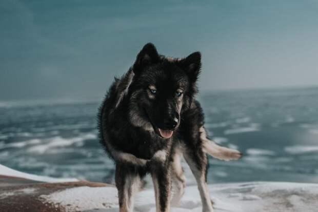 16. Будь добрым, даже если у тебя день не задался жизненная позиция, жизнеутверждающие, канада, собаки, философия жизни, фото собак, фотограф, хаски